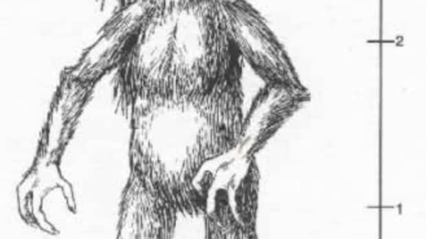 kalanaro-of-madagascar-mythical-beast-and-internet-star