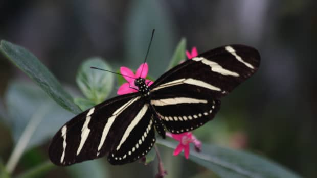 -and-when-all-the-wars-are-over-a-butterfly-will-still-be-beautiful-ruskin-bond-scenes-from-a-writers-life