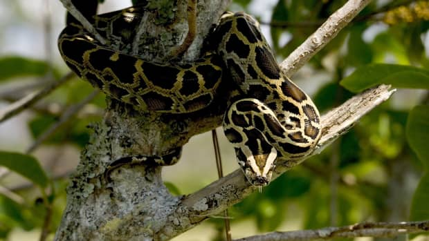 how-to-become-a-snake-catcher