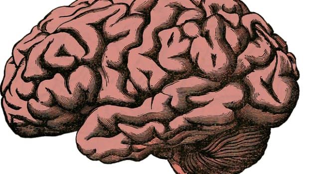 importance-of-dopamine-and-methods-to-improve-dopamine-naturally