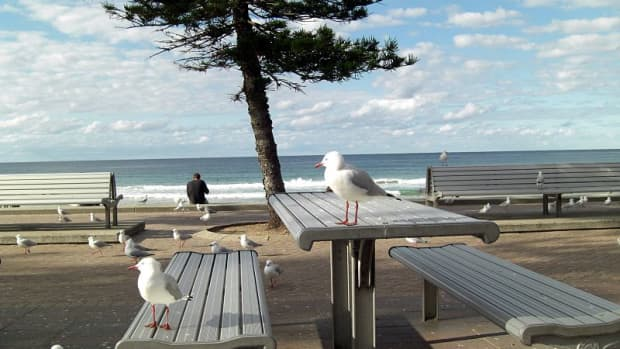 is-social-distancing-for-the-birds-urban-avian-life-during-covid-19