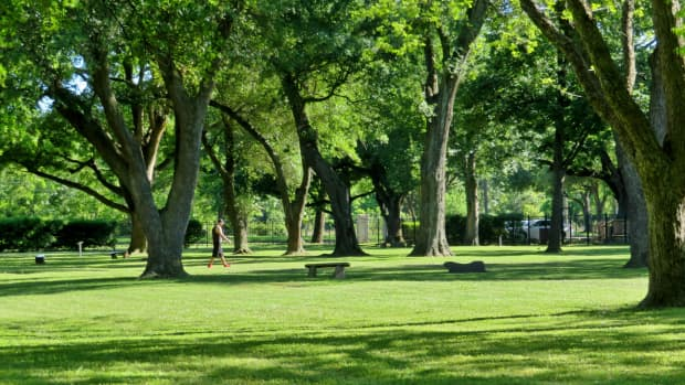 carolyn-h-wolff-park-an-urban-arboretum-in-houston