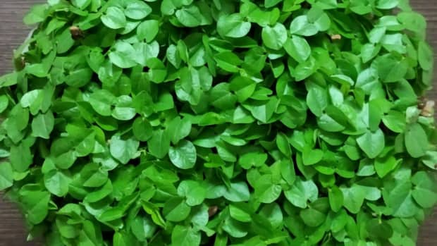 6-essential-nutritional-benefits-you-need-to-know-about-micro-greens