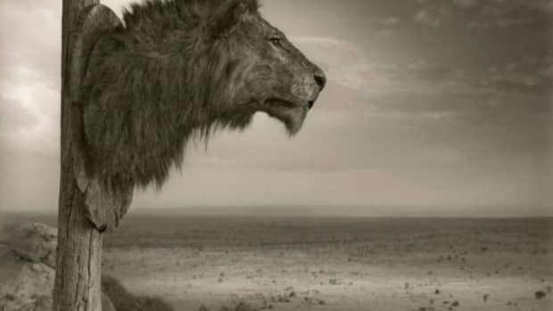 trophy-hunting-providing-revenue-and-incentives-to-conserve-and-protect-wild-populations