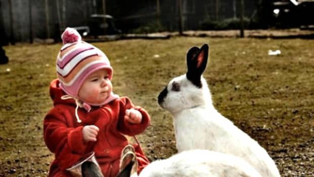 11-indian-exotic-and-wild-animals-you-can-keep-with-children