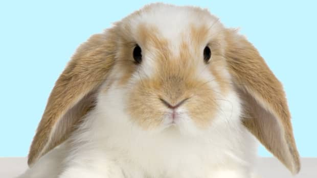 the-stuffed-bunny-movement