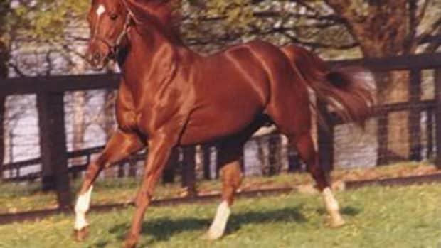great-racehorse-secretariat