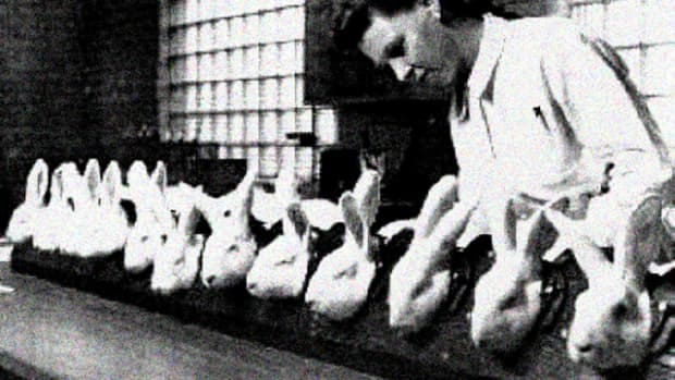 companies-test-on-animals
