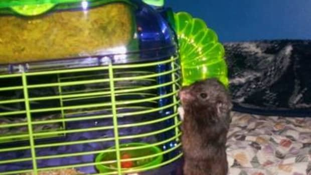 how-to-get-over-your-fear-of-hamsters