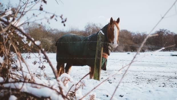 horse-care-in-winter