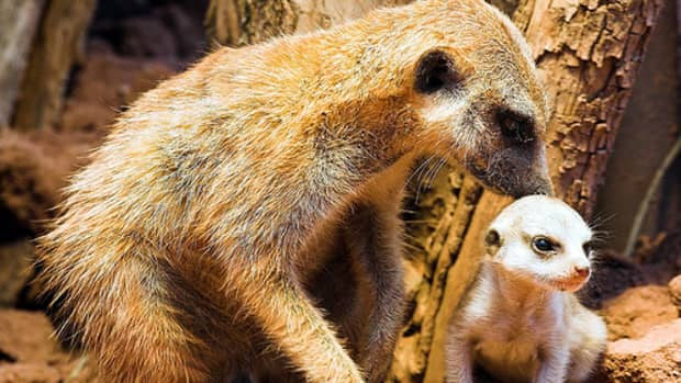 zoos-and-euthanasia