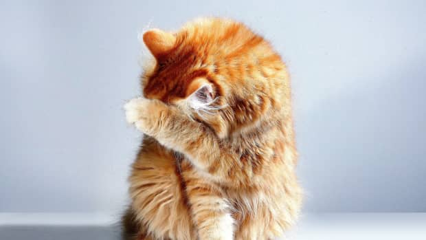 is-your-cat-crazy-learn-the-body-language-of-cats-and-find-out
