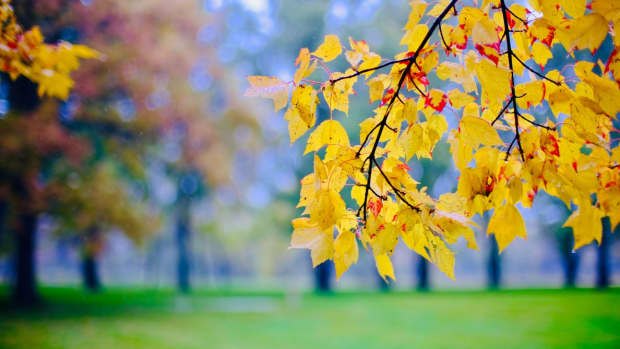 blossom-blossom-autumns-on-the-way