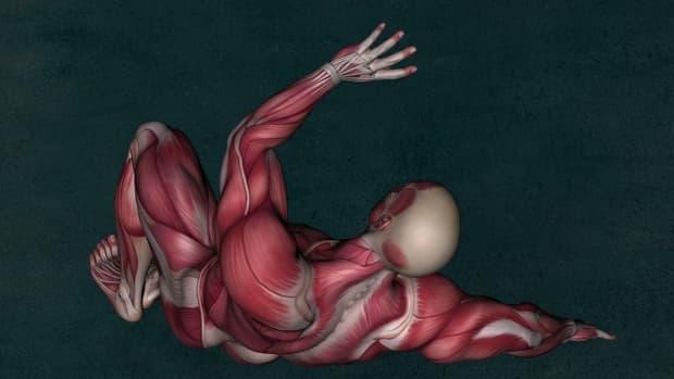 how-i-became-a-yoga-wellness-educator