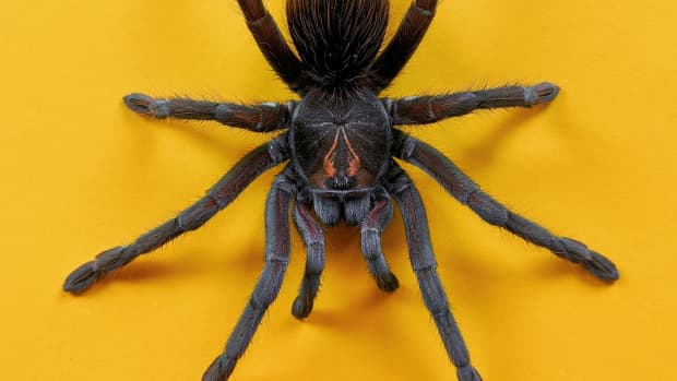 why-are-humans-afraid-of-spiders