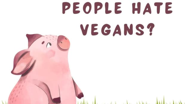 why-do-people-hate-vegans