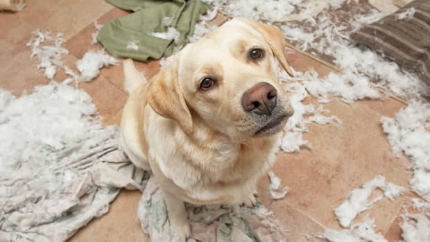 dont-leave-your-pet-alone-or-he-will-destroy-your-house