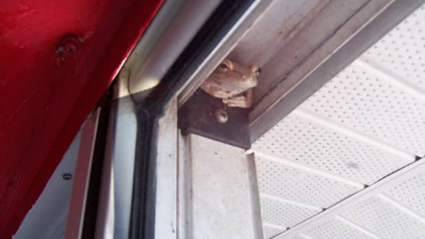 all-the-lovely-creatures-frogs-and-toads