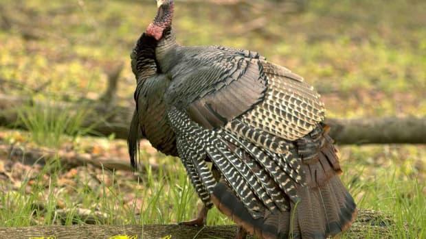thanksgivingwallpapersbackgrounds