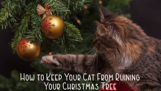 how-to-keep-your-cat-out-of-the-christmas-tree