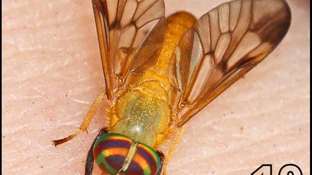 florida-bugs-that-bite