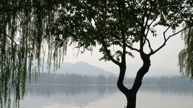 beneath-the-willow