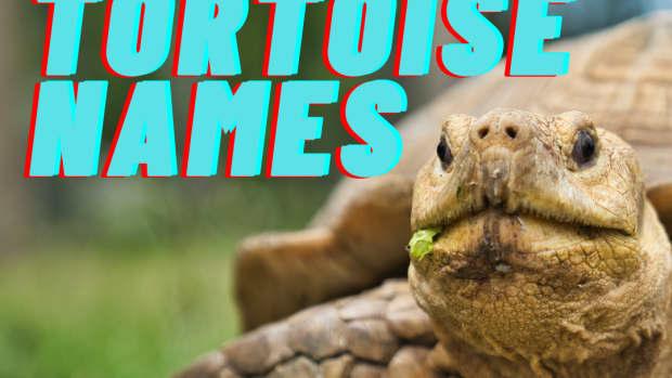 the-best-popular-fun-creative-pet-turtle-names