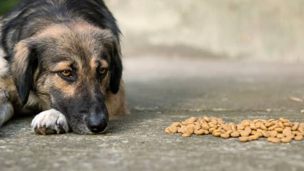 are-grain-free-diets-healthier-for-pets