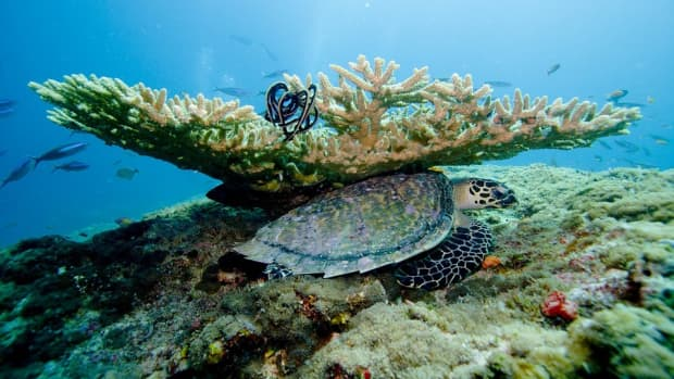 10-ways-corals-are-really-strange-animals-they-argue
