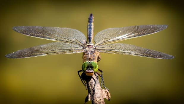 insect-names-in-italian-with-english-translations