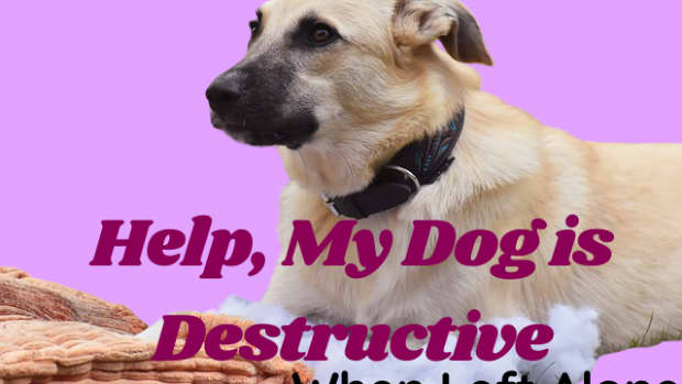 help-my-dog-destroys-things-when-left-alone