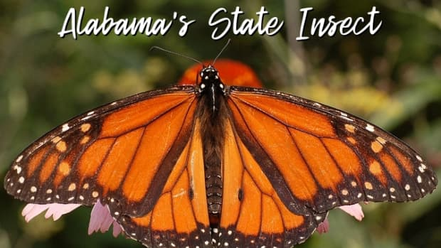 state-insect-of-alabama