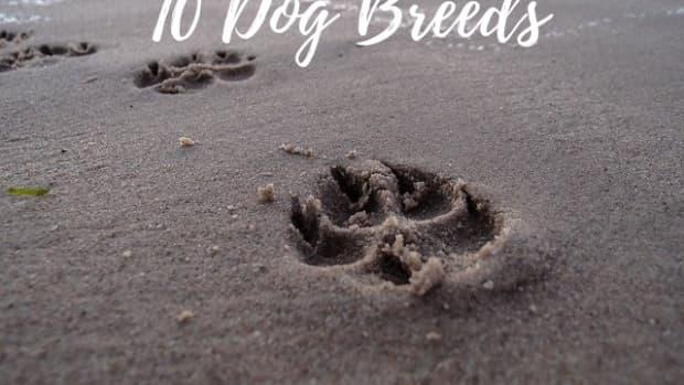 dog-breeds-with-webbed-feet