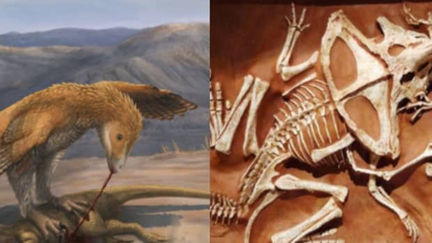 how-raptors-really-used-their-claws