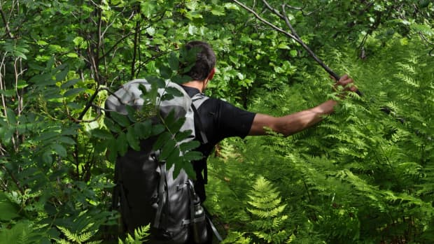 4-reasons-why-you-should-be-growing-a-covid-19-rainforest
