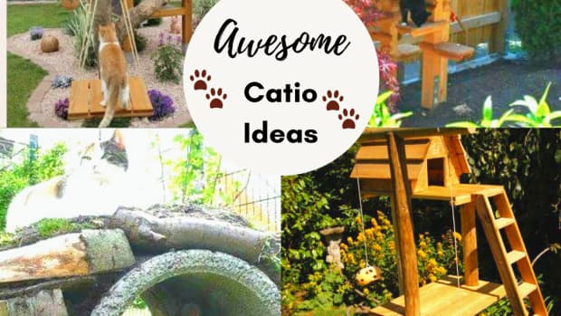 outdoor-cat-playground-play-areas