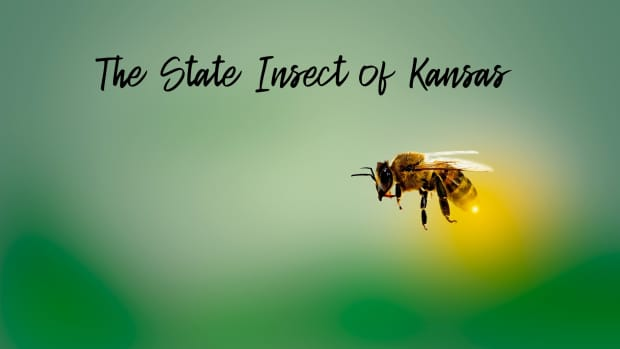 state-insect-of-kansas