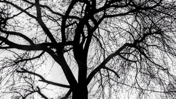 the-haunted-tree