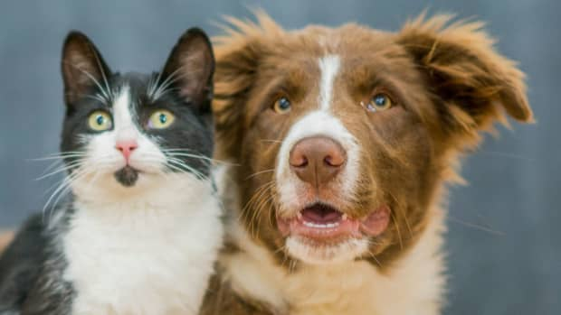 how-to-promote-animal-welfare-in-your-community