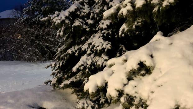 majestic-snowy-evergreen