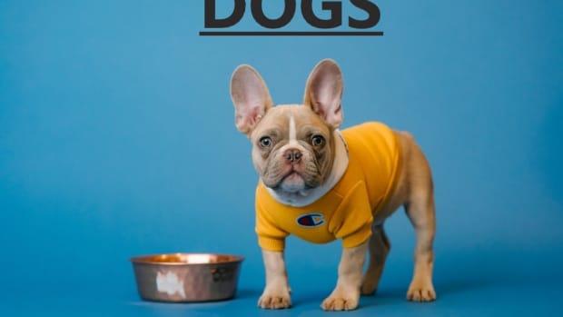dog-idioms
