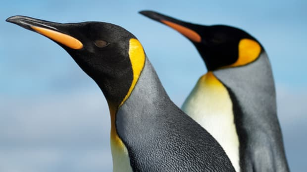 international-penguin-awareness-day