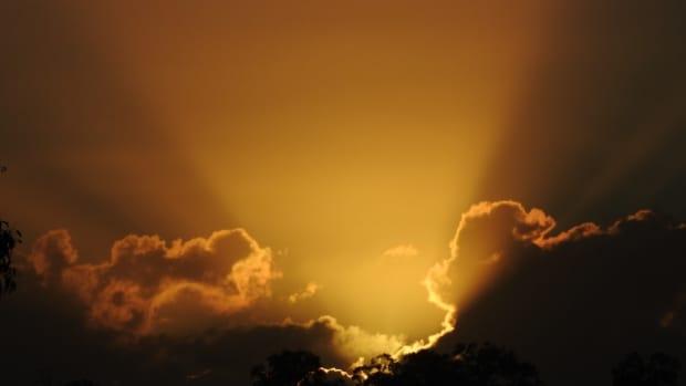 a-morning-glory