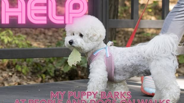 how-do-i-stop-my-puppydog-from-barking-at-everything-on-walks