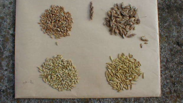 cereal-grains-millets-or-siridhanya-millets-which-grains-to-eat-and-why