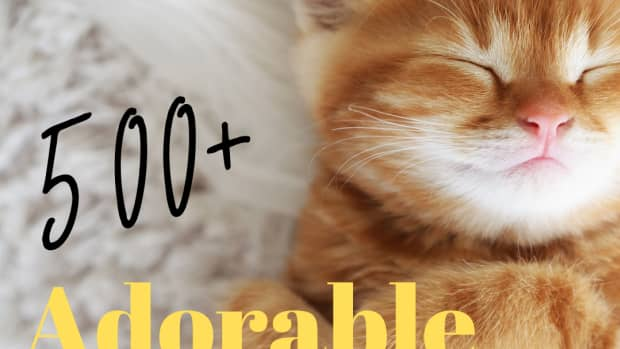 500-perfect-kitten-names