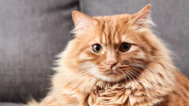 cool-cat-names-for-boys