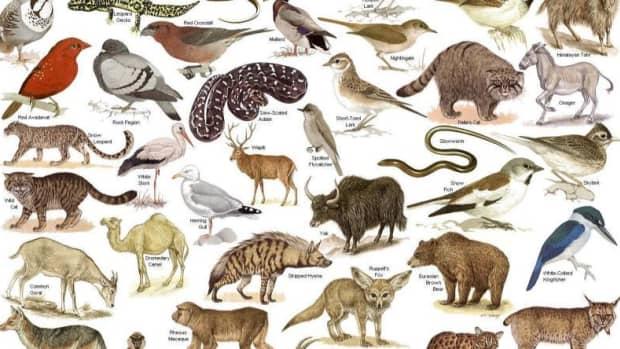 causes-of-depletion-of-wildlife