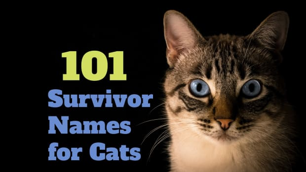 survivor-names-for-cats