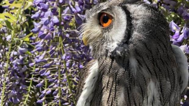 how-to-care-for-pet-owls